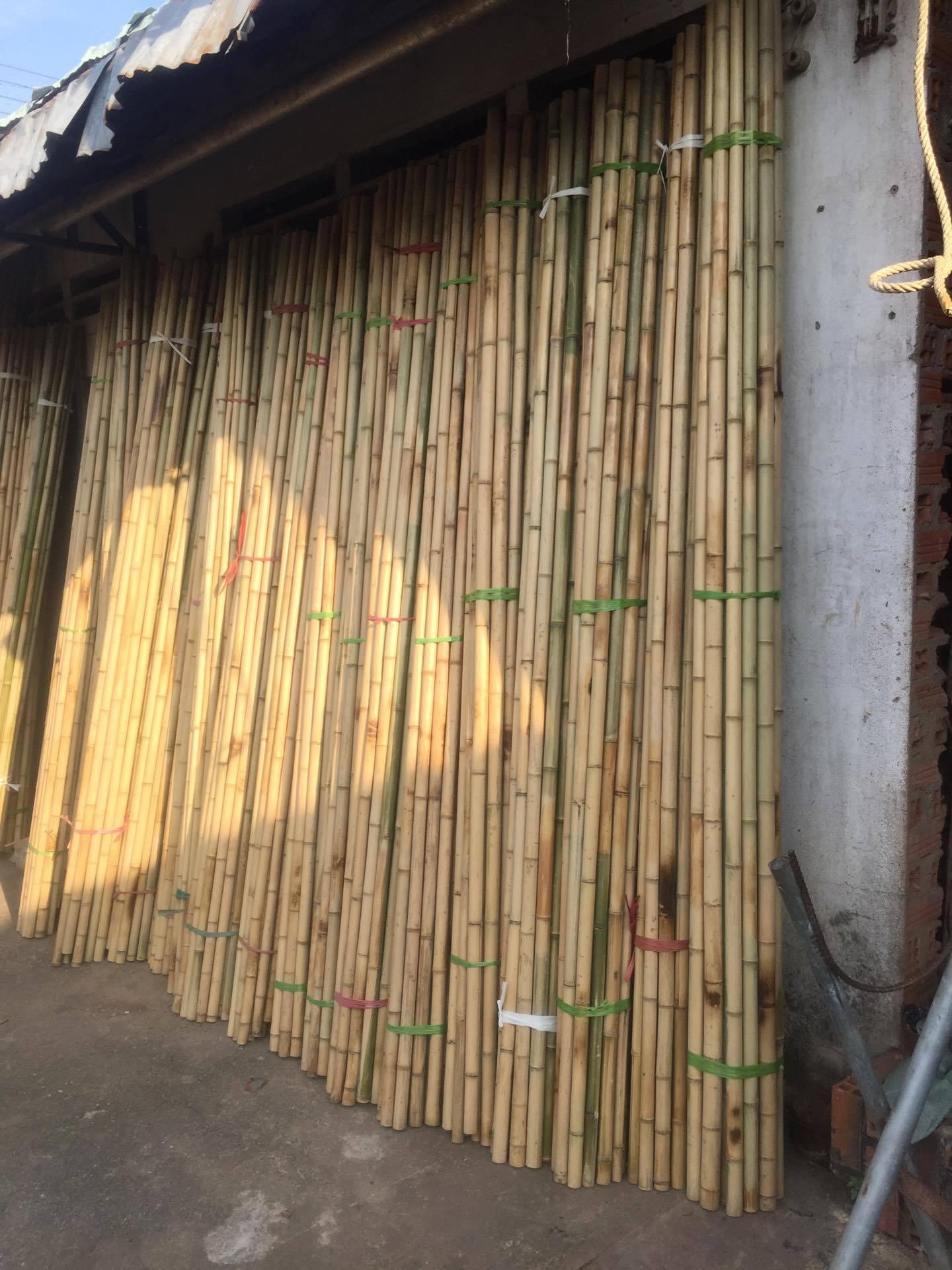cây trúc sào tre nứa