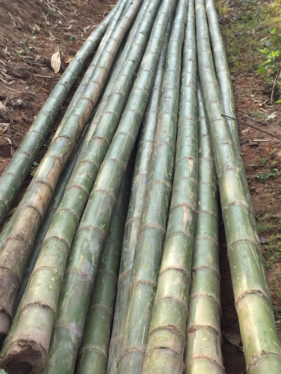 Tre luồng số lượng lớn tại Thanh Hóa