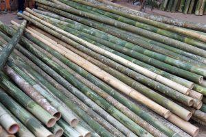 Hình ảnh cây lồ ô giá rẻ tại City Nội Thất